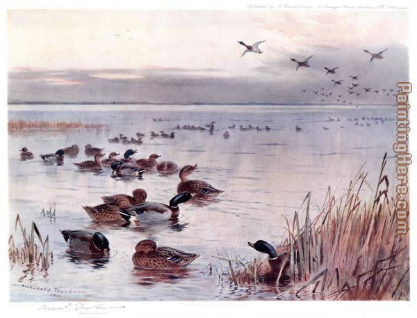 Mallard on the Lake at Sandringham painting - Archibald Thorburn Mallard on the Lake at Sandringham art painting