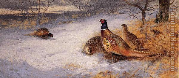 Pheasants in the Snow painting - Archibald Thorburn Pheasants in the Snow art painting