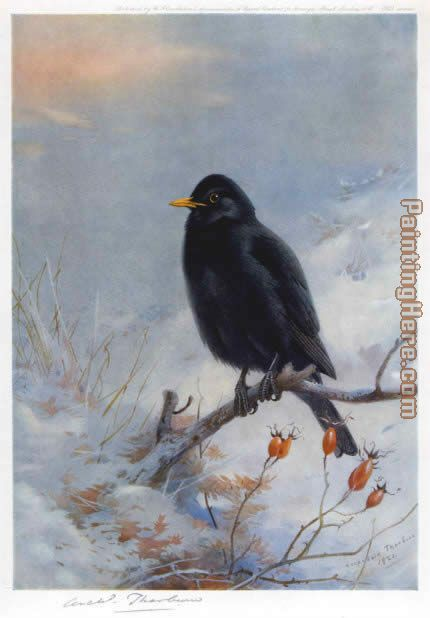 Winter Blackbird painting - Archibald Thorburn Winter Blackbird art painting