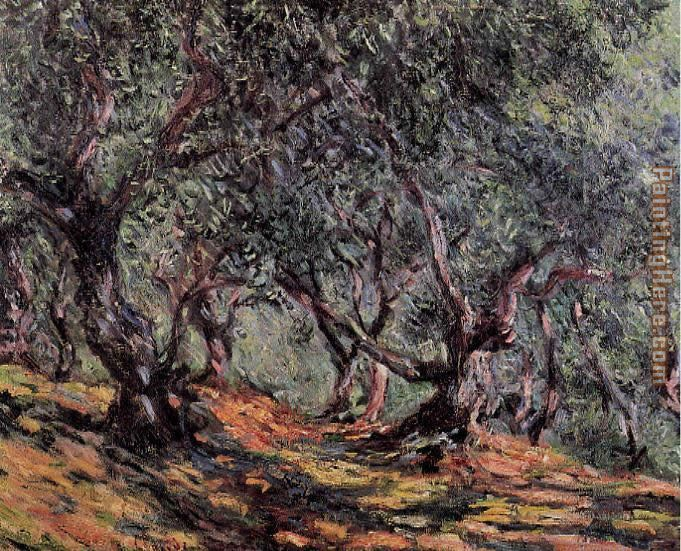 Olive Trees in Bordighera painting - Claude Monet Olive Trees in Bordighera art painting