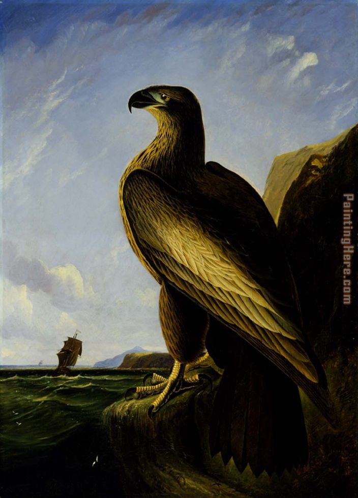 Washington Sea Eagle painting - John James Audubon Washington Sea Eagle art painting