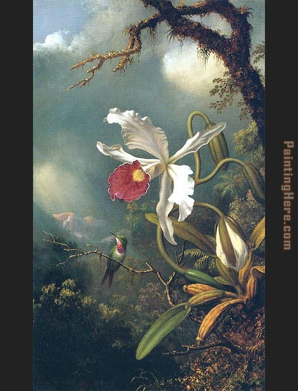 An Amethyst Hummingbird with a White Orchid painting - Martin Johnson Heade An Amethyst Hummingbird with a White Orchid art painting