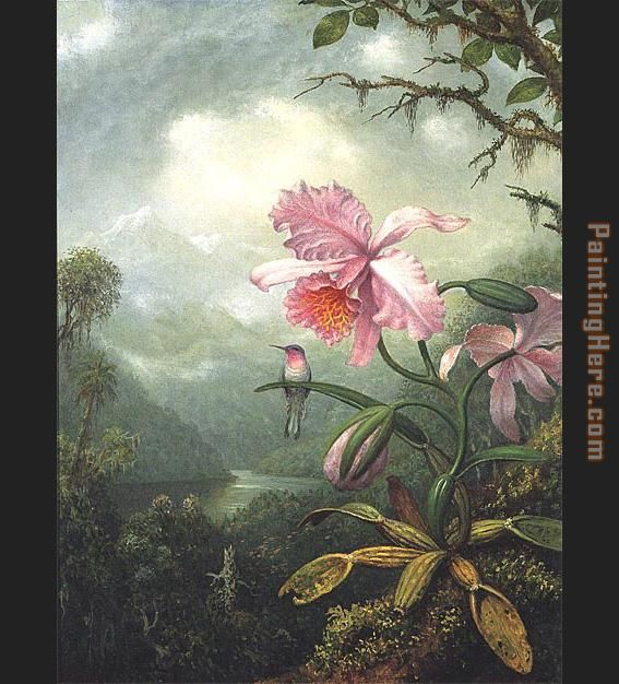 Hummingbird Perched on an Orchid Plat painting - Martin Johnson Heade Hummingbird Perched on an Orchid Plat art painting