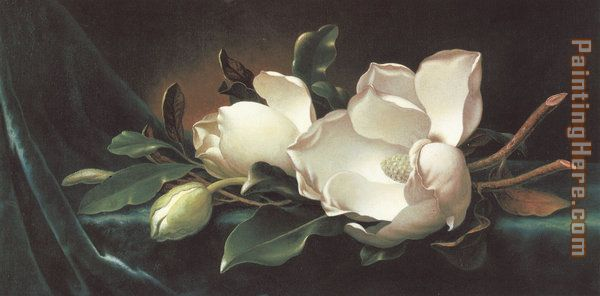 Magnolia Blossoms on Blue Velvet painting - Martin Johnson Heade Magnolia Blossoms on Blue Velvet art painting