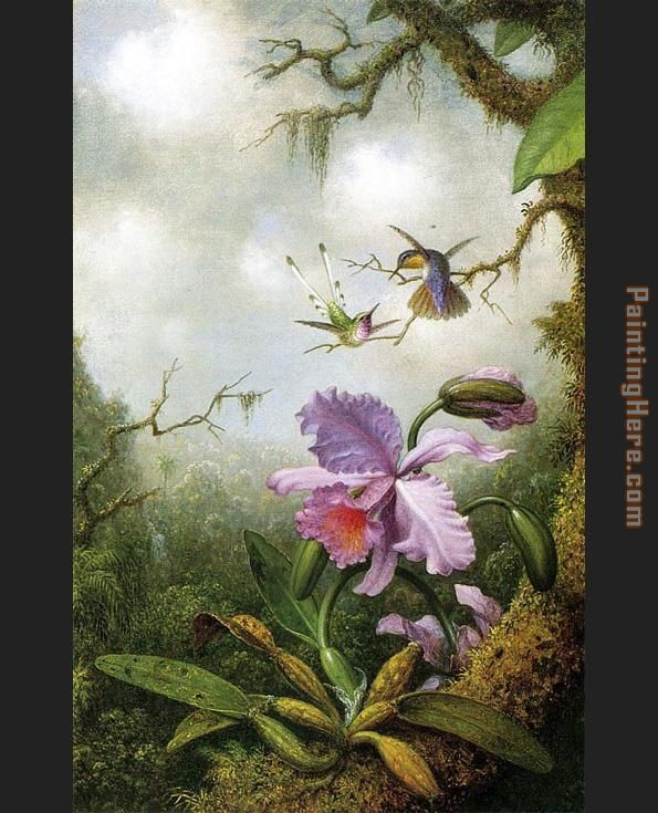 Martin Johnson Heade Two Hummingbirds with a Pink Orchid Art Painting