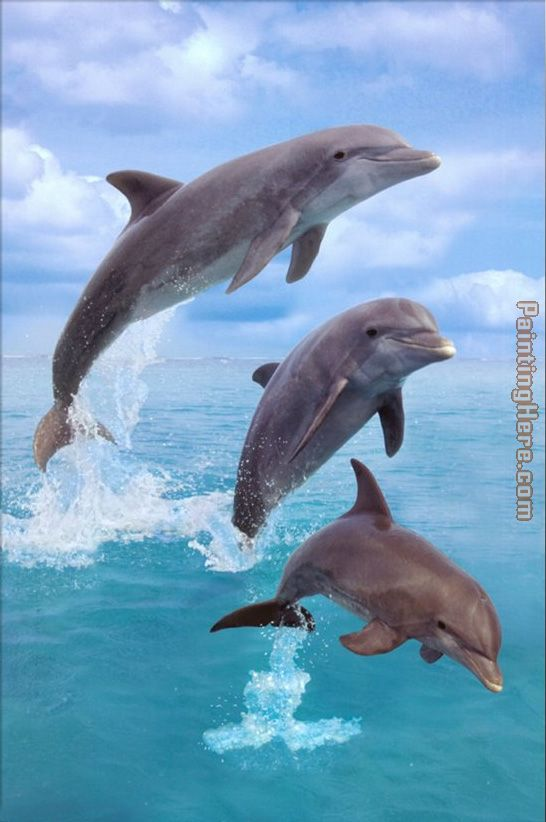 Dolphin painting - Sea life Dolphin art painting