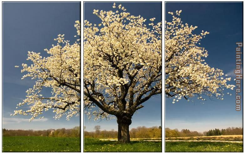 Blossom painting - landscape Blossom art painting