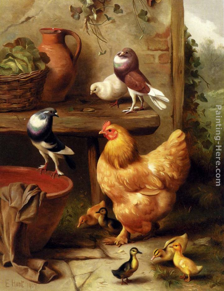 A Chicken, Doves, Pigeons And Ducklings painting - Edgar Hunt A Chicken, Doves, Pigeons And Ducklings art painting
