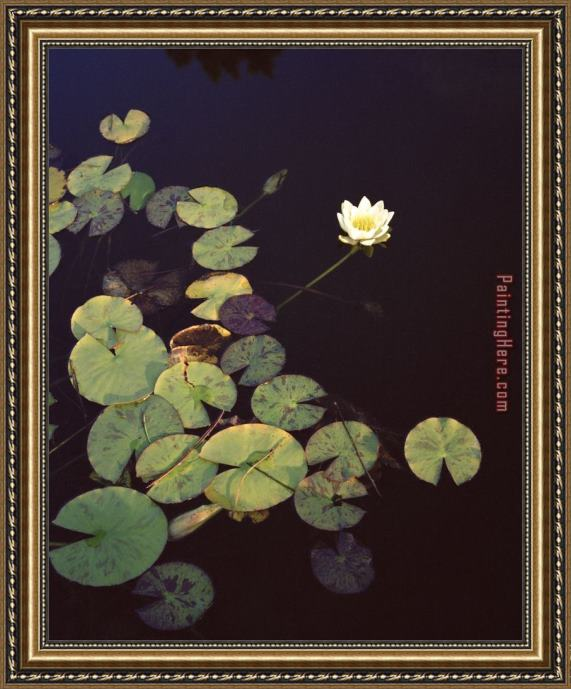 2017 new Waterlilies Framed Painting