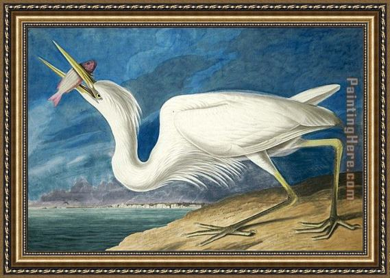 John James Audubon Great White Heron Framed Painting