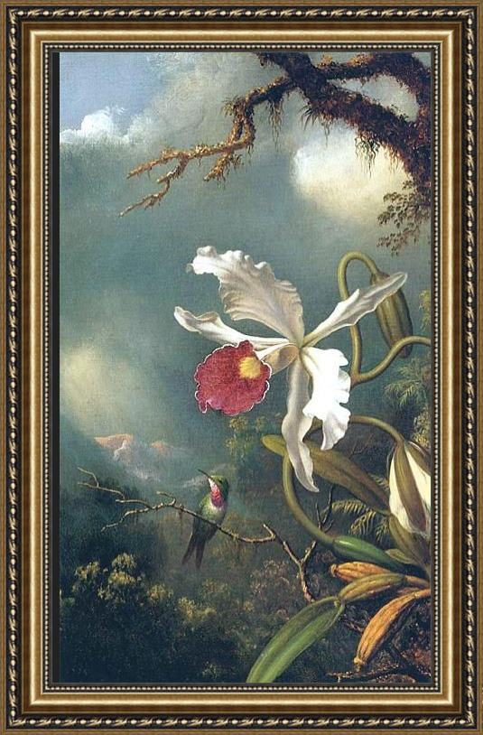 Martin Johnson Heade An Amethyst Hummingbird with a White Orchid Framed Painting