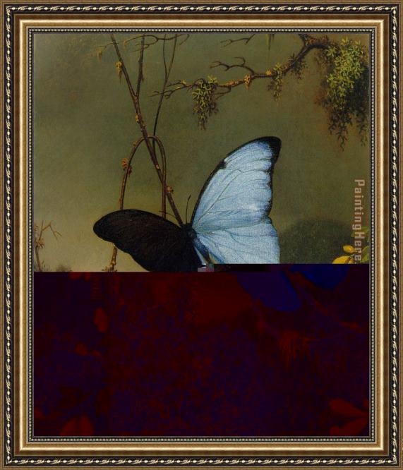 Martin Johnson Heade Blue Morpho Butterfly Framed Painting