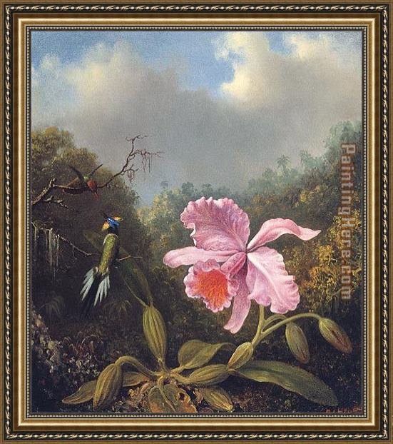 Martin Johnson Heade Fighting Hummingbirds with Pink Orchid Framed Painting