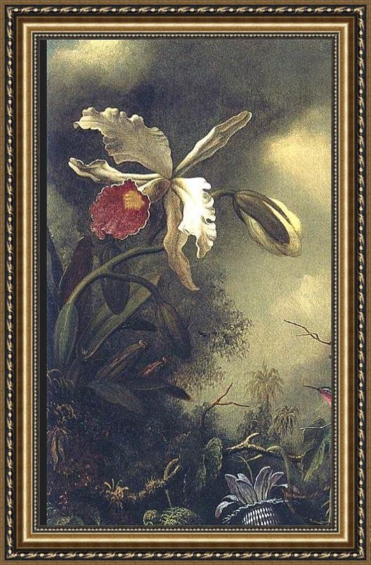 Martin Johnson Heade White Orchid and Hummingbird Framed Painting