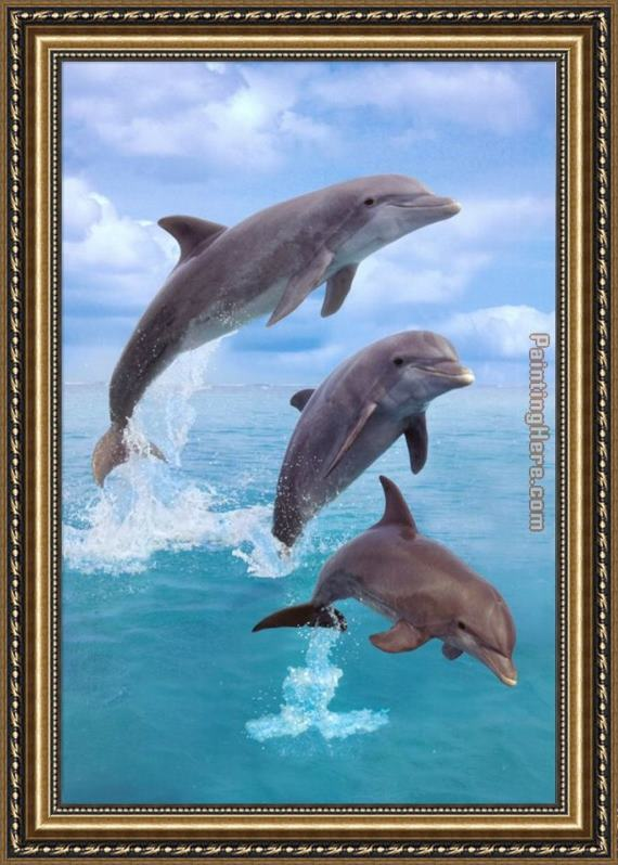 Sea life Dolphin Framed Painting