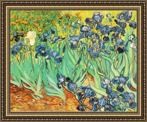 Vincent van Gogh Irises Framed Painting