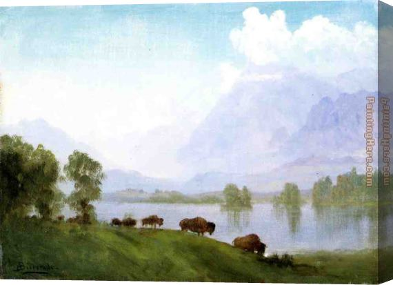 Albert Bierstadt Buffalo Country Stretched Canvas Painting