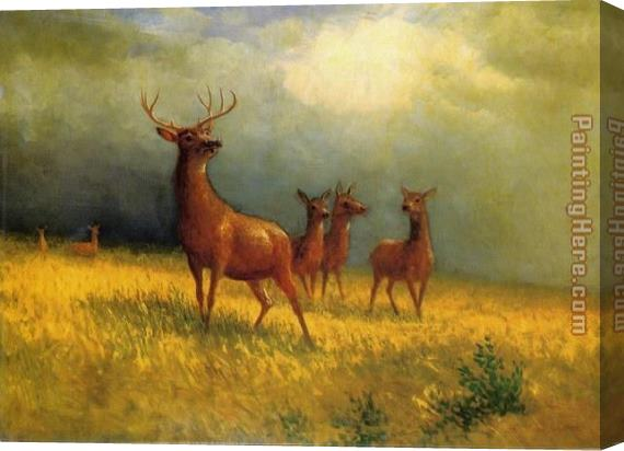 Albert Bierstadt Deer in a Field Stretched Canvas Painting