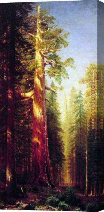 Albert Bierstadt The Great Trees Mariposa Grove California Stretched Canvas Painting