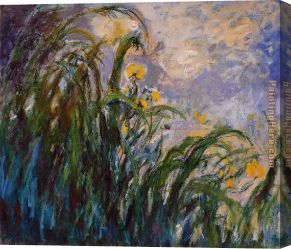 Claude Monet Les iris jaunes 1824 Stretched Canvas Painting