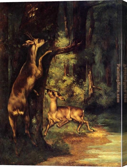 Gustave Courbet Male and Female Deer in the Woods Stretched Canvas Painting
