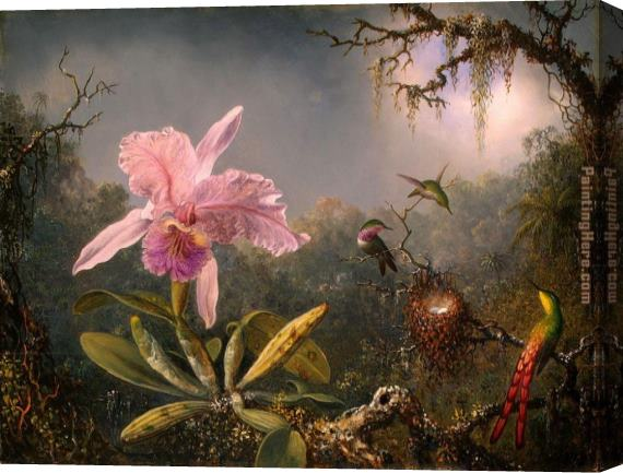 Martin Johnson Heade Cattleya Orchid and Three Brazilian Hummingbirds Stretched Canvas Painting