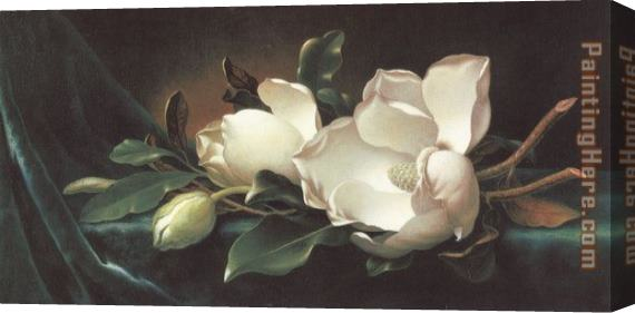 Martin Johnson Heade Magnolia Blossoms on Blue Velvet Stretched Canvas Painting