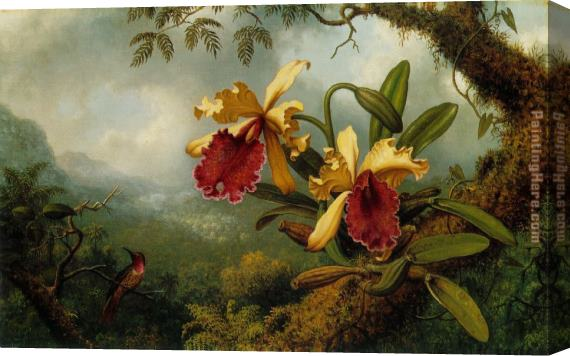 Martin Johnson Heade Orchids and Hummingbird Stretched Canvas Painting