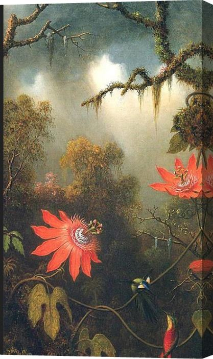 Martin Johnson Heade Two Hummingbirds Perched on Passion Flower Vines Stretched Canvas Painting