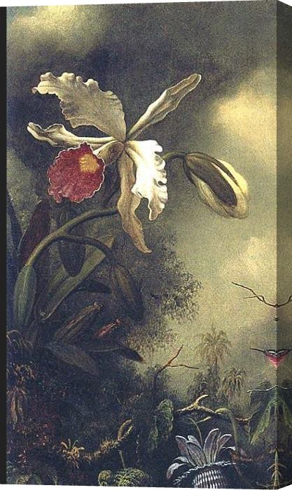 Martin Johnson Heade White Orchid and Hummingbird Stretched Canvas Painting