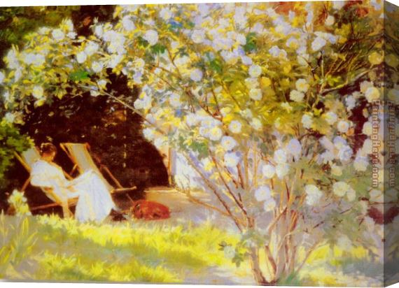Peder Severin Kroyer Les Roses Stretched Canvas Painting