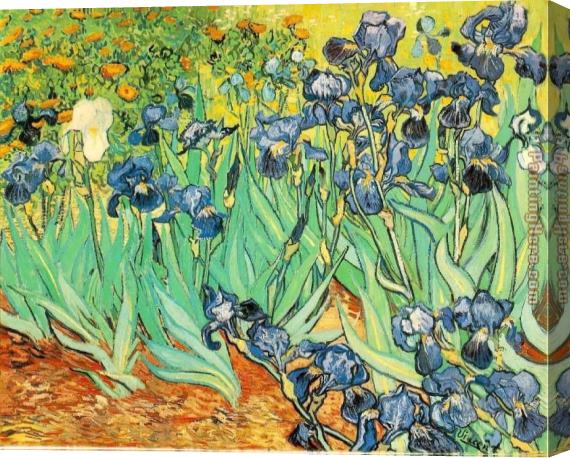 Vincent van Gogh Irises Stretched Canvas Painting