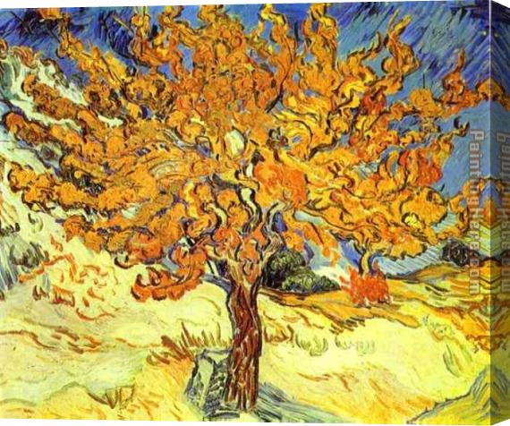 Vincent van Gogh Mulberry Tree Stretched Canvas Painting