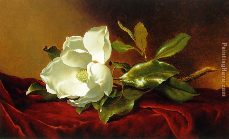 Martin Johnson Heade A Magnolia on Red Velvet Art Painting