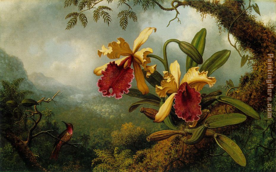 Orchids and Hummingbird painting - Martin Johnson Heade Orchids and Hummingbird art painting